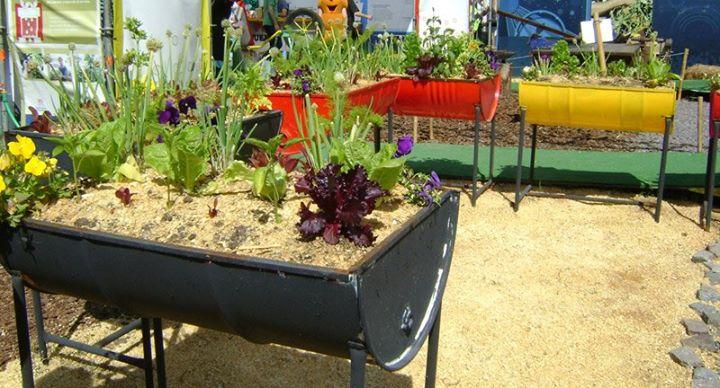 Huertos caseros 4 imagenes educativas for Plantas para huerta organica