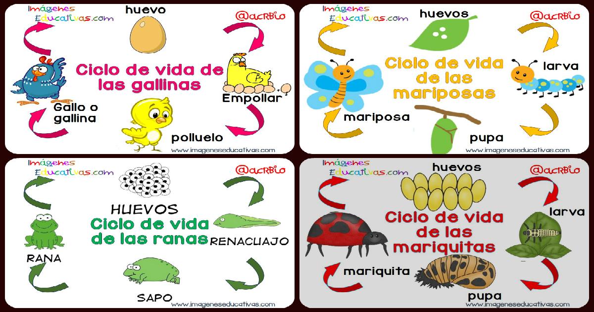 vitales en imágenes y sencillos para niños - Imagenes Educativas