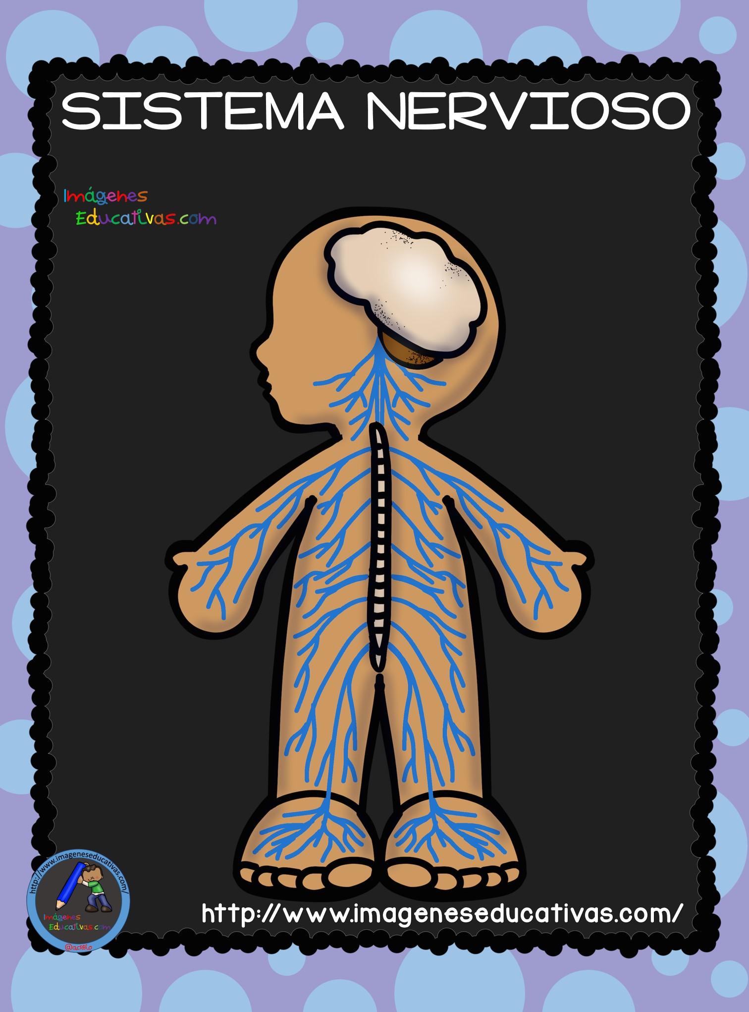 El Cuerpo Humano; Aparatos y Sistemas para Primaria (14