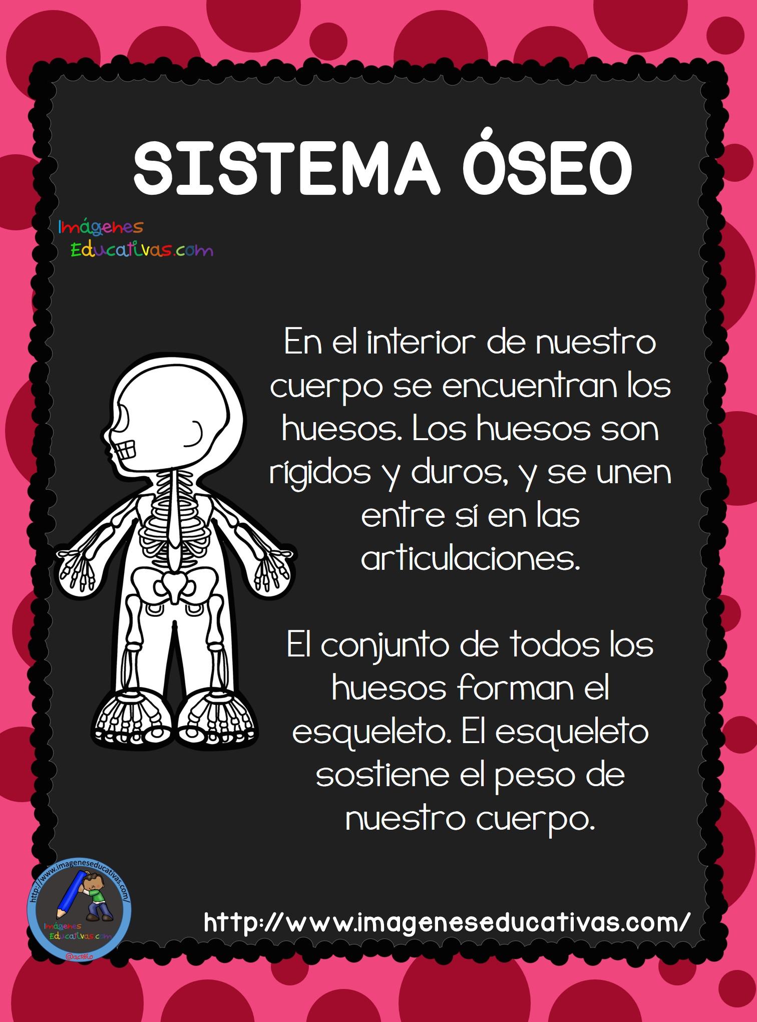 El Cuerpo Humano; Aparatos y Sistemas para Primaria (3